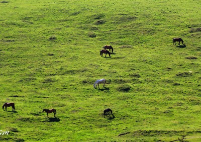 Horses in the mountains of Bucovina