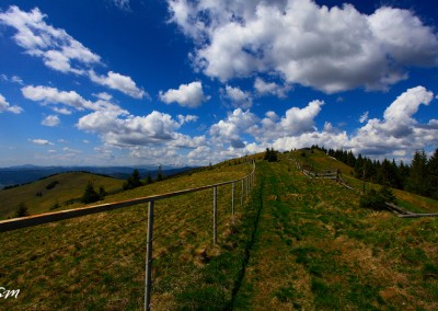 Trail in Bucovina